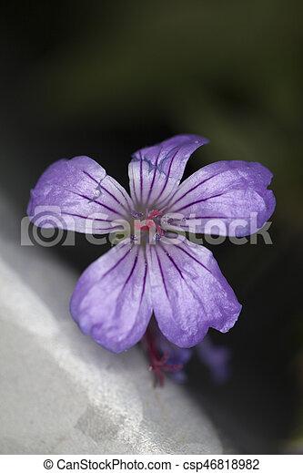 flower - csp46818982