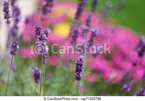 Flower - csp71933786