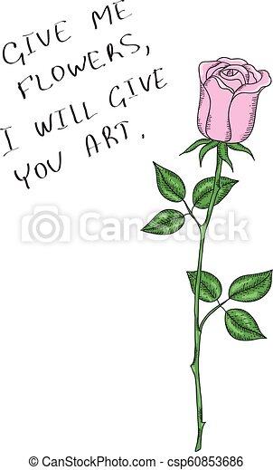 flower pink rose stem on white background vector design for