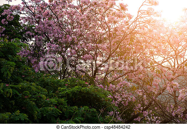Flower pink trumpet tree naturally beautiful flowers in the garden flower pink trumpet tree csp48484242 mightylinksfo
