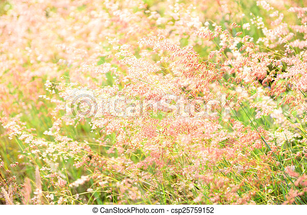 flower soft grass at evening - csp25759152