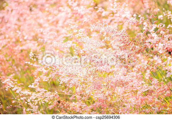 flower soft grass at evening - csp25694306