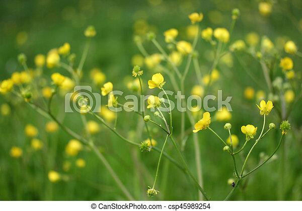 Flower - csp45989254