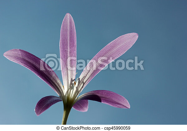 Flower - csp45990059