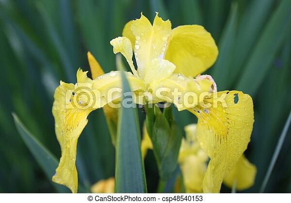 flower - csp48540153