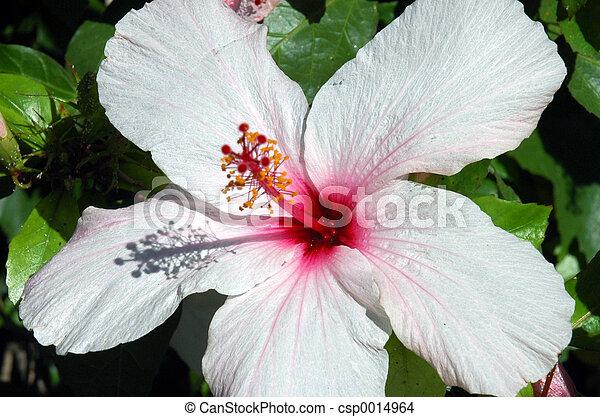 flower - csp0014964