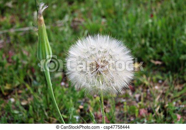 flower - csp47758444