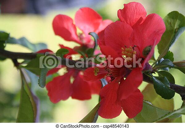 flower - csp48540143