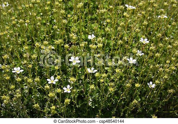 flower - csp48540144