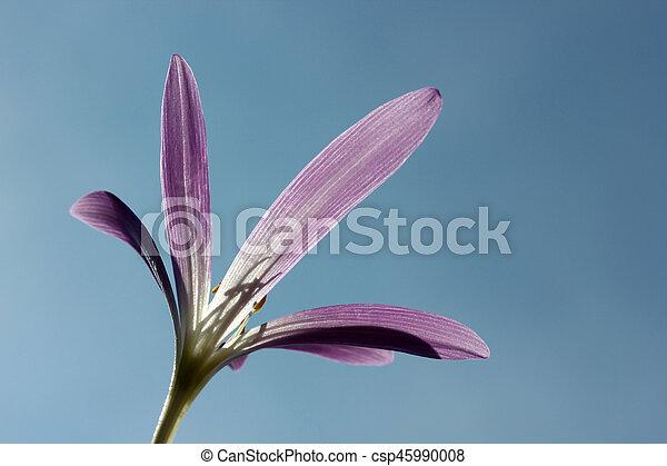 Flower - csp45990008