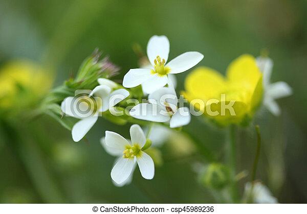 Flower - csp45989236