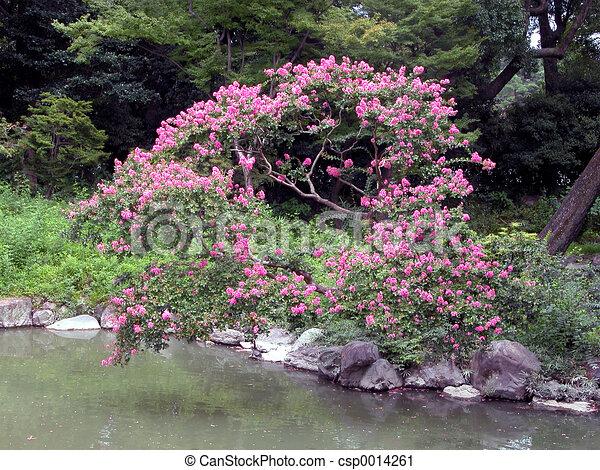 Flower tree - csp0014261
