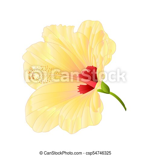 Flower Tropical Plant Yellow Hibiscus Vectoreps Flower Tropical