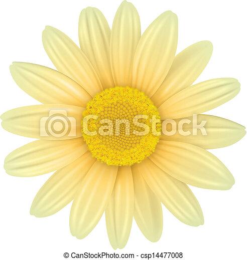 Flower - csp14477008