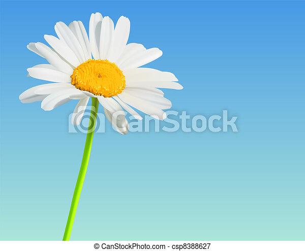 Flower vector nature background. Chamomile bloom - csp8388627