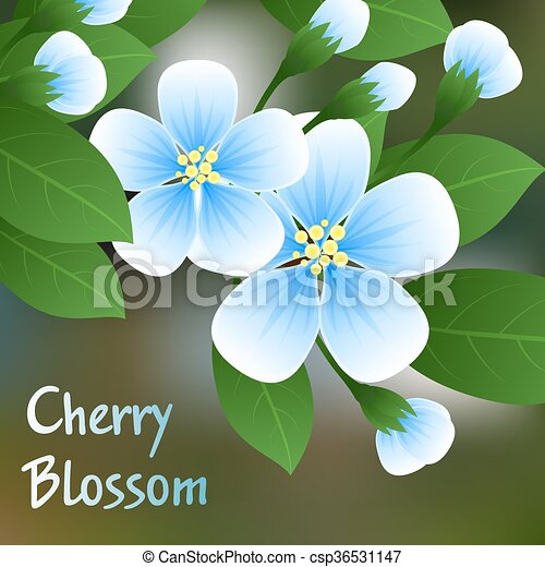 Flowering cherry. Blue flowers on a branch with green leaves and place for text. Vector - csp36531147