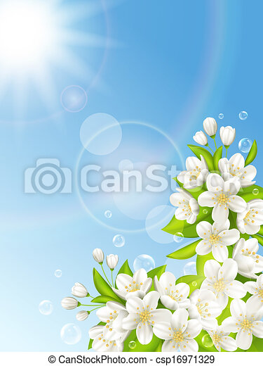 Flowering cherry on the background of blue sky - csp16971329