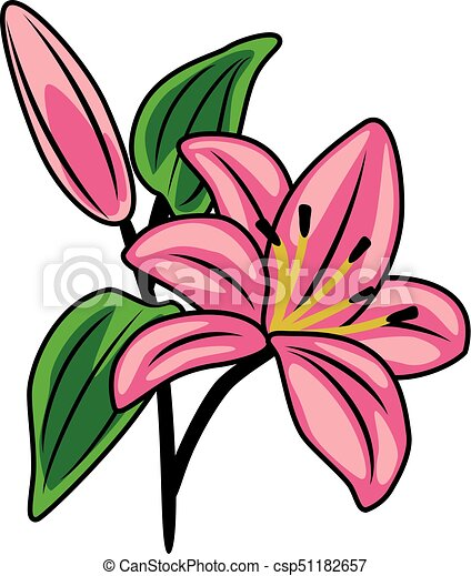 flowering pink lily vector illustration rh canstockphoto com lily clip art free lily clipart png