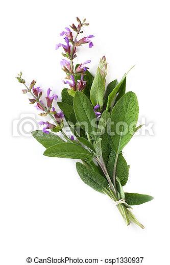 Flowering Sage - csp1330937