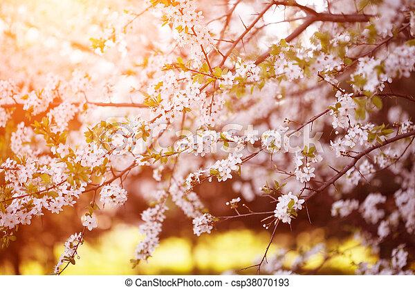 Flowering Spring Trees Sunset In Spring Or Summer Landscape