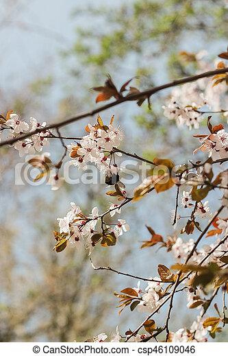 Flowering trees blooming garden white flowers warm spring mightylinksfo