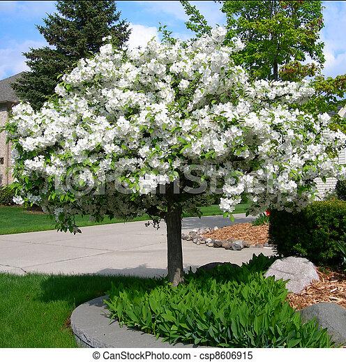 Flowering trees in spring flowering tree in spring with blossoms flowering trees in spring csp8606915 mightylinksfo