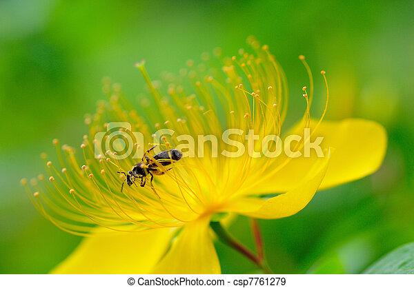 Flowers Abeja