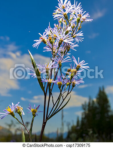 Flowers against Blue Sky - csp17309175