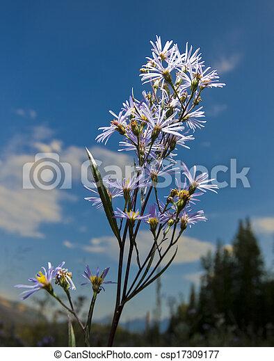 Flowers against Blue Sky - csp17309177