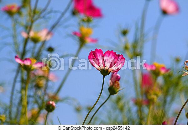 Flowers Against Blue Sky - csp2455142
