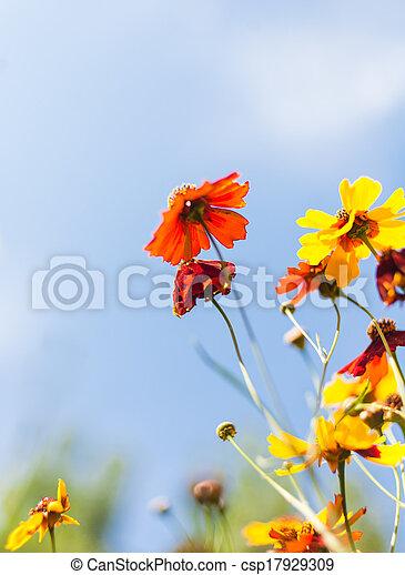 flowers against blue sky - csp17929309