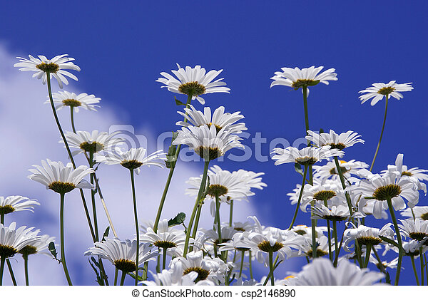 Flowers Against Blue Sky - csp2146890