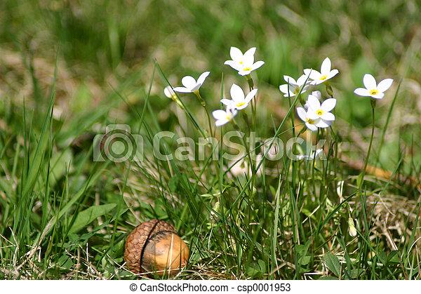 Flowers and Acorn - csp0001953