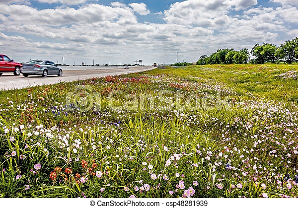 Flowers and landscapes along texas highway roadside in spring flowers and landscapes along texas highway roadside in spring csp48281939 mightylinksfo