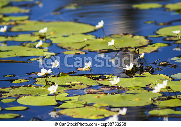 Flowers and Lilly pads - csp38753258