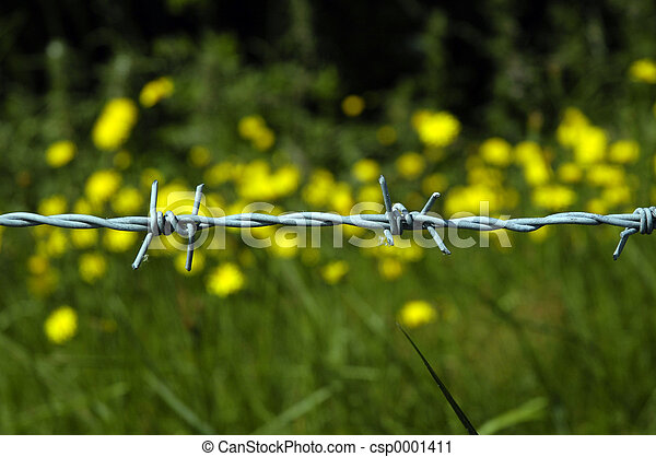 flowers and wire - csp0001411