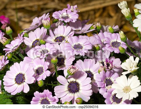 Flowers background - csp25094316