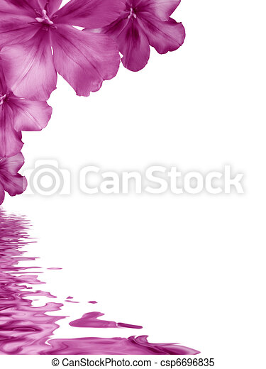 Flowers background reflecting in water - csp6696835