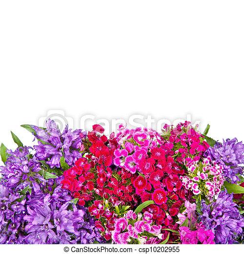 flowers background - csp10202955