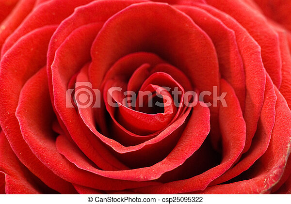Flowers background - csp25095322