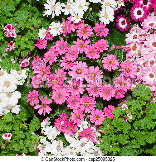 Flowers background - csp25095325