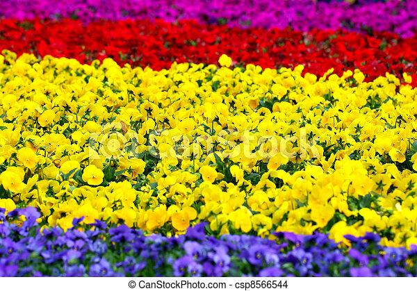 Flowers background - csp8566544