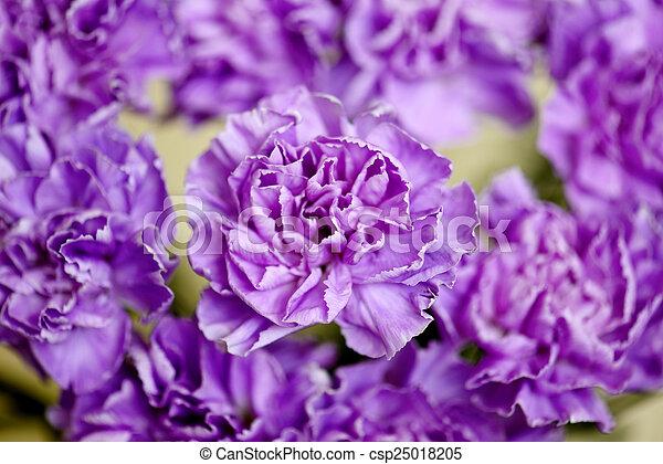 Flowers background. - csp25018205