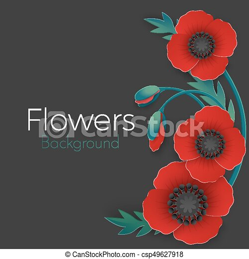 Flowers background with full blown and still blooming red poppies - csp49627918