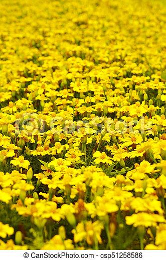 Flowers background yellow flower field flowers background yellow flowers background yellow flower field csp51258586 mightylinksfo