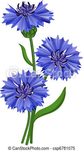 Flowers blue cornflower. Vector illustration. - csp6781075