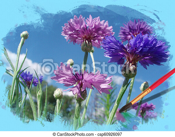 Flowers cornflowers in a water colour frame - csp60926097