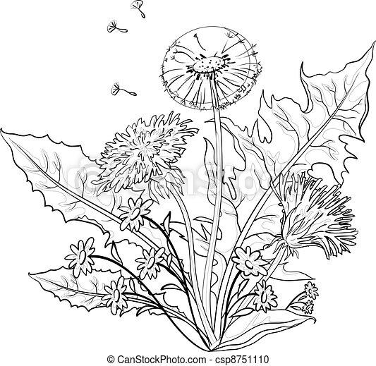 Flowers dandelions with leaves, contours - csp8751110