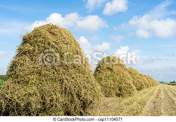 flowers drying on a haystack - csp11104071