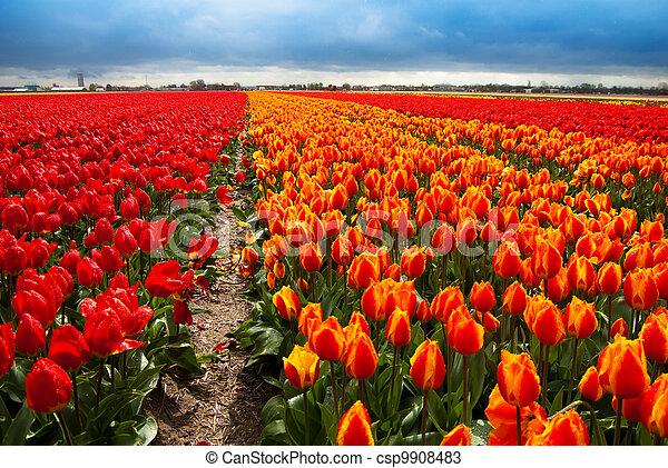 flowers field background - csp9908483
